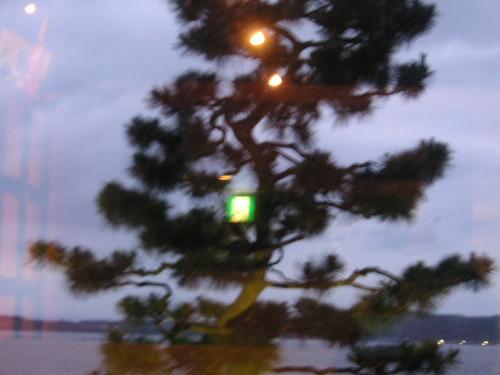 松の木にかかる非常口