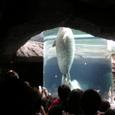 旭山動物園②アザラシ