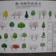 埼玉県・市町村の木々