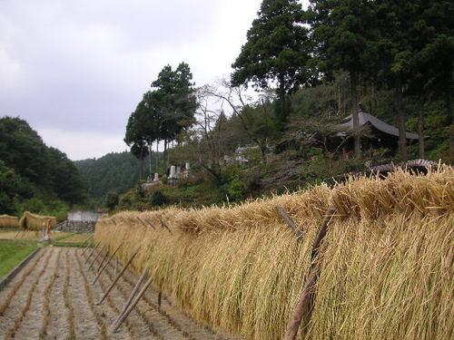 稲刈りの終わった田
