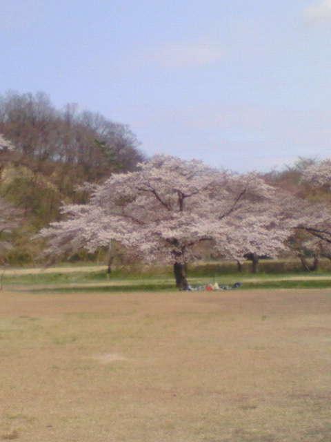 一目千本桜マラソン